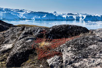 Eisberge des Ilulissat Gletschers