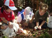 Suchen und Entdecken von Pilzen.