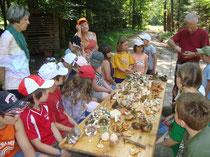 Es wurden viele verschiedene Pilzsorten gefunden.