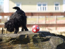 Asterix has captured the ball :-)  - Photo by John Fagernäs