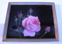 Rosenbild - ca. 20x30 cm