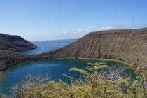 Tagus Bay (Isabela) - Galapagos