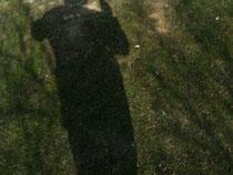 Bin ich ein Schatten oder im Licht?