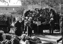 Chou chinois est arrivé, 1988