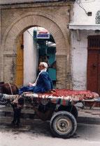 Belebt mit Pferdehälfte (Kairouan, Tunesien)