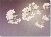 2003年4月 夜桜