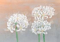 2011年9月 白い彼岸花