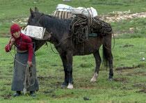 Les chevaux sont indispensables sur le plateau tibétain