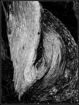 The face of wood, Zermatt. Einzel-Abzug auf Hahnemühle Photo Rag. Foto-Format 60 x 90 cm. Box-Rahmen. 5 Abzüge. Preis: 4900 CHF.