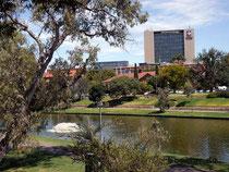 Adelaide - die Universität