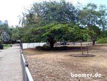 Flutschäden im botanischen Garten