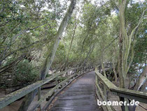 der Boardwalk durch den Mangroven-Wald am Brisbane River