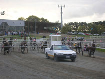 Trotting Race in Palmy