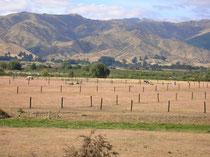 Pferdefarm in Marlborough