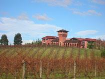 Highfield Estate Vineyard bei Blenheim