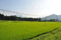 An diesem Reisfeld haben wir die erste Nacht verbracht