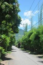 Die Strasse vor dem Haus in die Berge