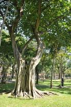 Die Bäume meiner Kinderzeit