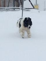nur ich und der Schnee