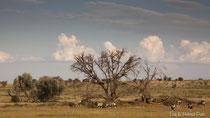 Oryx im Trockenflussbett