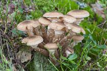 Pilze sind fürs Recycling zuständig