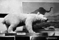 Экскурсия в музей зоологии.