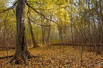à l'automne
