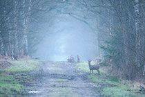 aube en forêt (seine et marne)