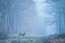velours dans la brume (seine et marne)