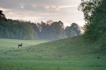 silhouette au petit matin (Yonne)