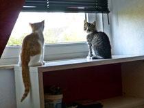Kimba & Max