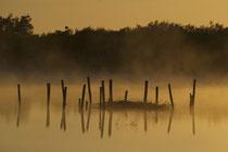 A l'aube ....© E. LAUCHER