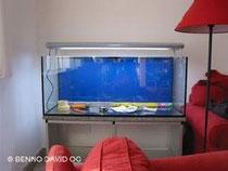 leeres aufgestelltes Aquarium