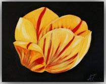 Acrylbild Tulpe, 50x40x2cm, Jahr: 2012, Preis: 250€