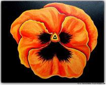 Acrylbild Stiefmütterchen,  Größe: 50x40x2cm, Jahr: 2012, Preis: 250€