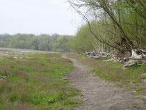 Der Strand im Sand ohne jungen Seehag, da dieser immer wieder entfernt wurde (2005).