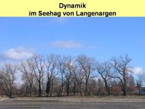 """Schwarzpappeln am DLRG-Strand """"Im Sand"""""""