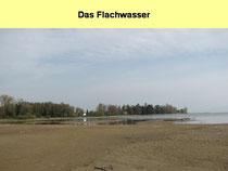 Flachwasserzone des Schussendeltas im Spätwinter beim Schwedi