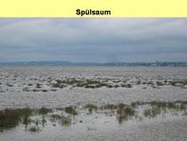 Die Quellgrasflur verschwindet im Bodensee.