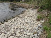 Erodiertes Ufer