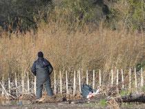 Angler stören die Vogelwelt, zertreten die aufkommende Schilfvegetation und hinterlassen oft Müll.