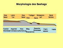 Schematischer Schnitt durch den Untergrund des Seehags