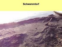 Schwemmtorf aus Laub- und Holz wird zu Detritus.