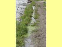 Warmer, heller und nährstoffreicher Uferbereich dient im Frühsommer als Fisch-Kinderstube.