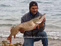 113cm Hecht mit 10,50Kg gefangen beim Schleppfischen am Attersee