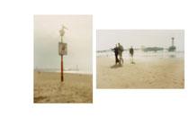...........Am Strand, Pelikan | Am Strand, Scheveningen, 2004 | 2003