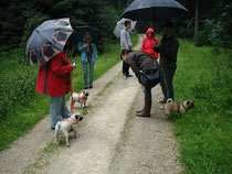 Mieses Wetter - wenig Mopsfreunde