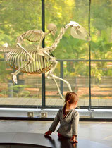 Toulouse / Musée d'histoire naturelle