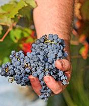 Le vin de Marcillac-vallon