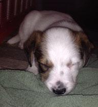 Eddi, 5 Wochen alt